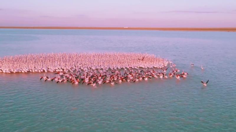 航拍大群火烈鳥南下避寒 攝影師:這般時刻使人愛上這土地