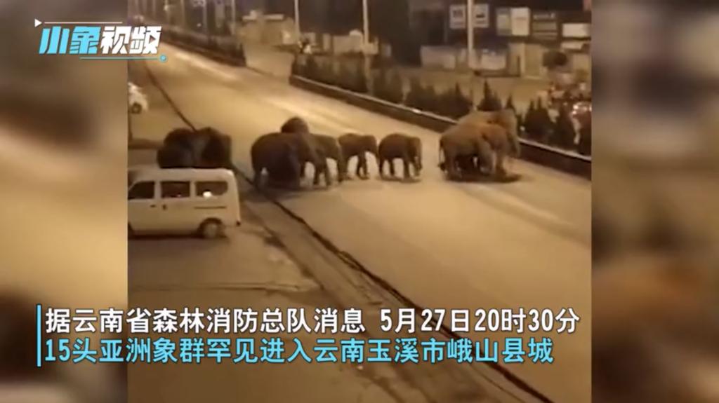 無人機追蹤監察:野生亞洲象群進入雲南峨山縣城 徘徊民房附近