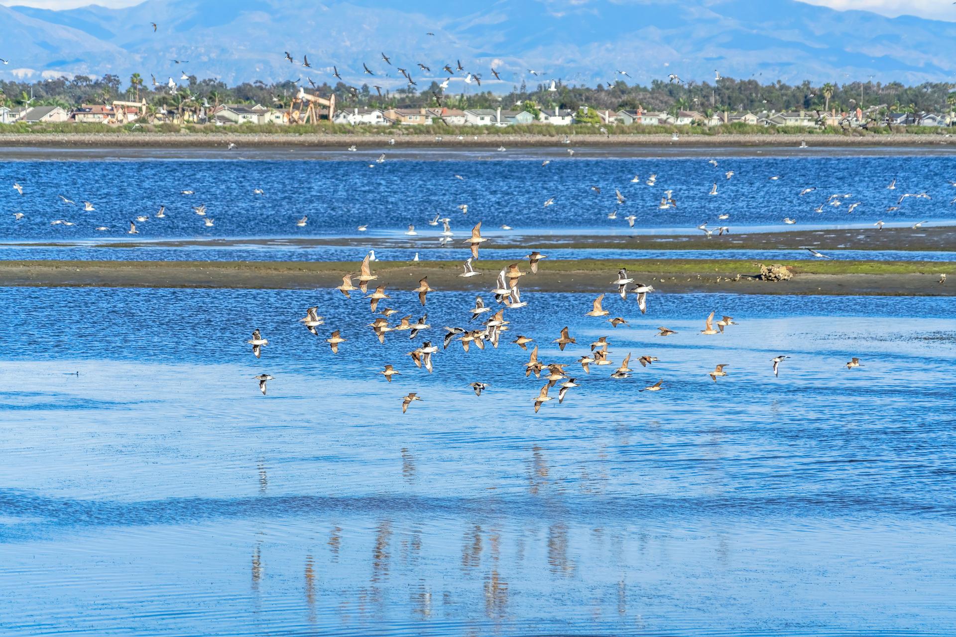 無人機墜加州一生態保護區 受驚燕鷗棄巢 數千鳥蛋被棄灘上
